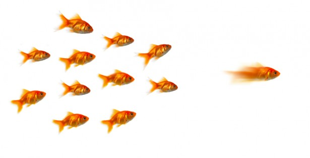 leaders, leadership, why do people follow leaders, leadership consultant, employees