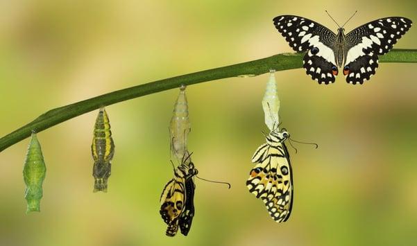 Hidden-Value-of-Embracing-Change.jpg